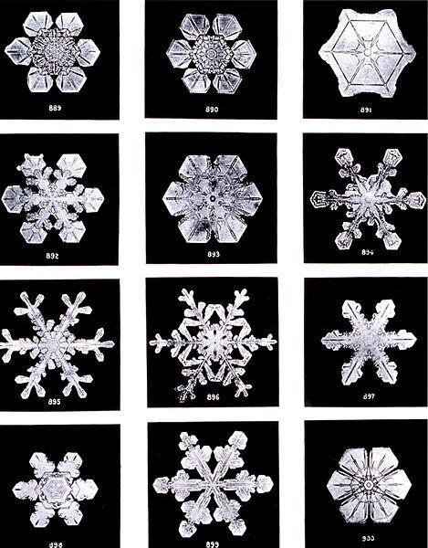 Schneeflocken von Wilson Bentley